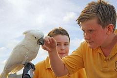 papagal_copii_scoala