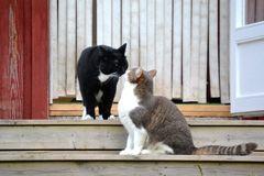 pisici_salut